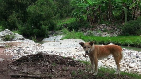 Dieser Hund begleitete uns den ganzen weg über bis zu den Wasserfällen