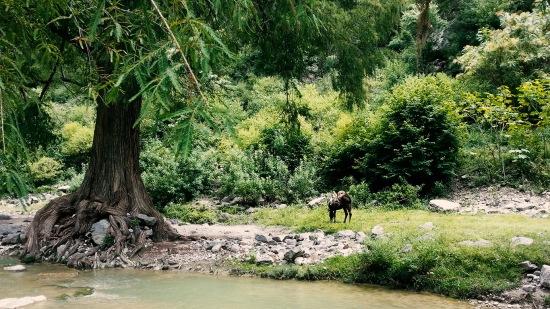 Am anderen Flussufer grasten Esel, die von den Einheimischen zum Transport benutzt werden